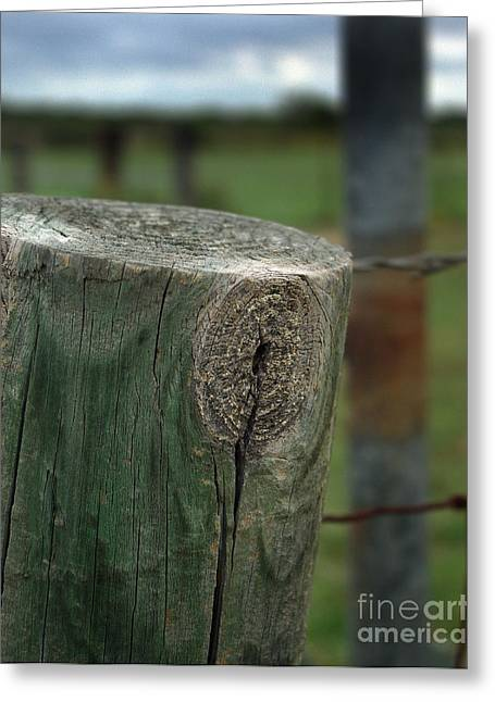 Knothole Greeting Cards - Knot Here Greeting Card by Peter Piatt