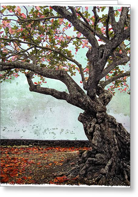 Knotted Tree Greeting Card by Daniel Hagerman