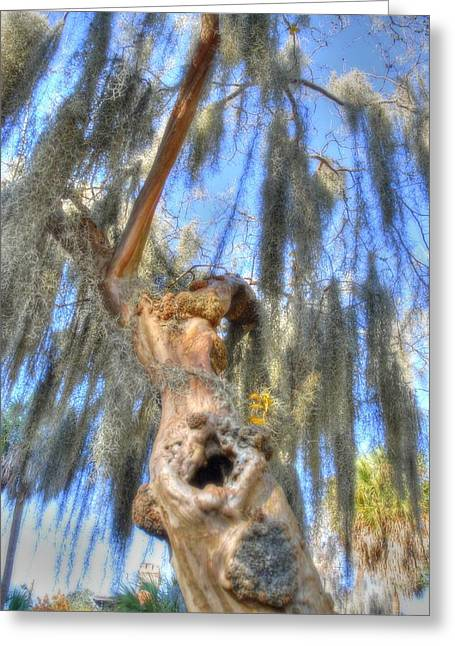Knotty Greeting Cards - Knotty trunk Greeting Card by Linda Covino