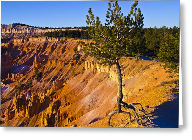 Tree Roots Greeting Cards - Know Your Roots - Bryce Canyon Greeting Card by Jon Berghoff