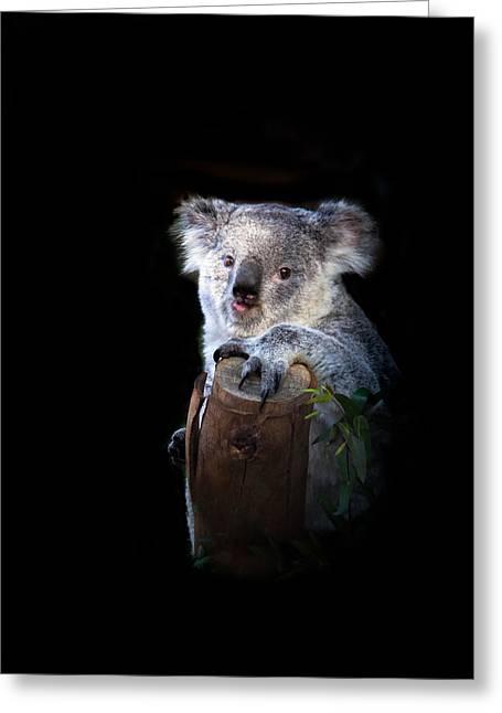 Haybale Greeting Cards - Koala Bear Greeting Card by Robert Bales