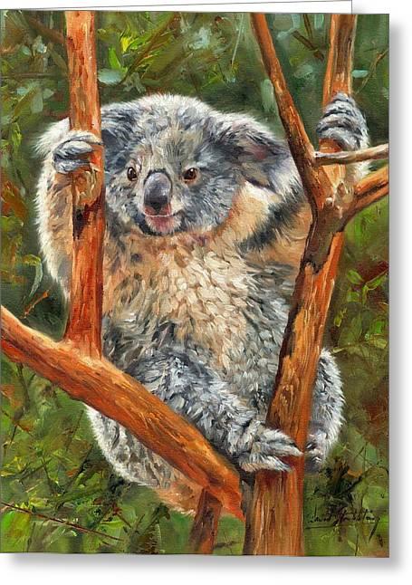 Eucalyptus Greeting Cards - Koala Greeting Card by David Stribbling