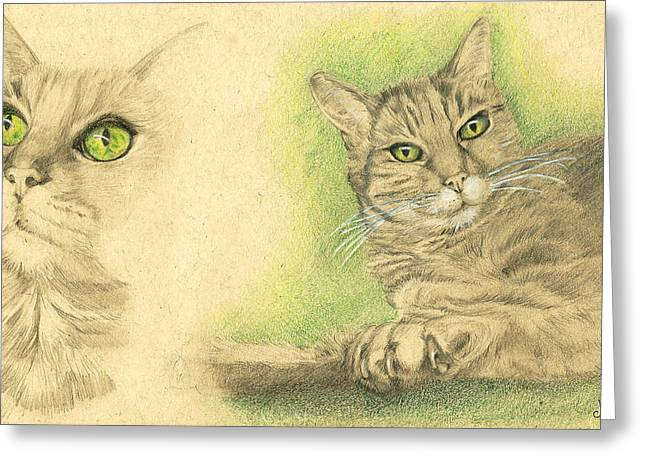 Cat Drawings Greeting Cards - Kobi Study Greeting Card by Marcianna Howard