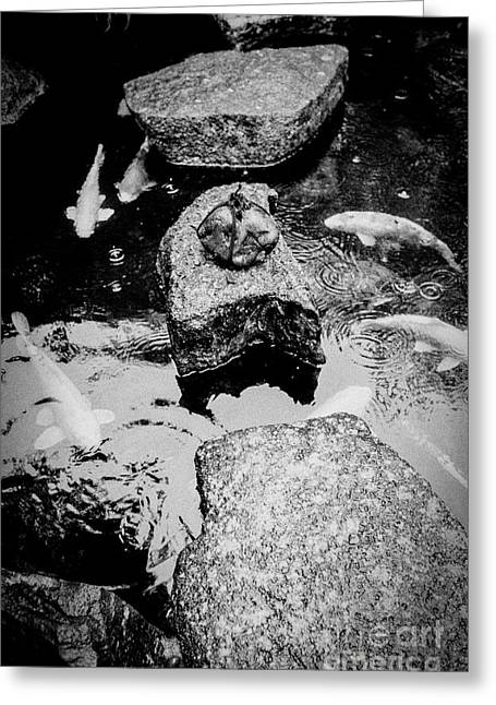 Koi Around The Old Stone Path Greeting Card by Dean Harte