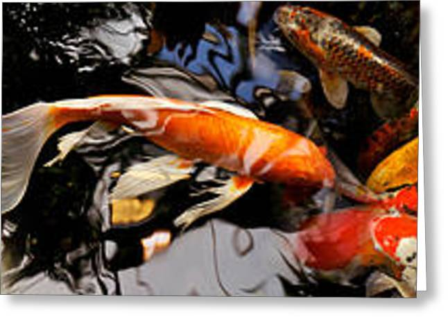 School Of Fish Greeting Cards - Koi Carp Greeting Card by Panoramic Images