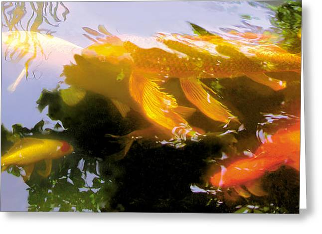 Robert Conway Greeting Cards - Koi Parade Greeting Card by Robert Conway