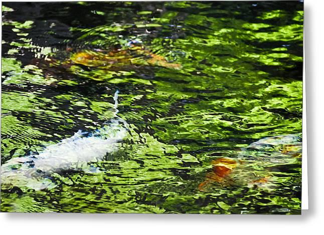Splashy Greeting Cards - Koi Pond Greeting Card by Christi Kraft