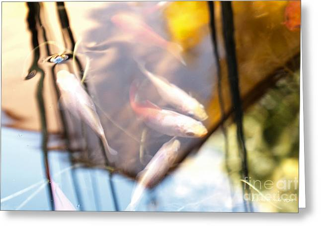 Koi the Symbol of Love and Friendship Greeting Card by Artist and Photographer Laura Wrede