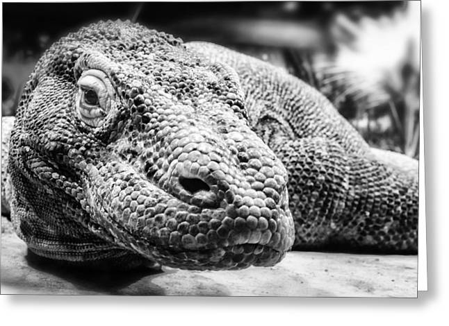 Komodo Dragon Greeting Card by Anthony Citro
