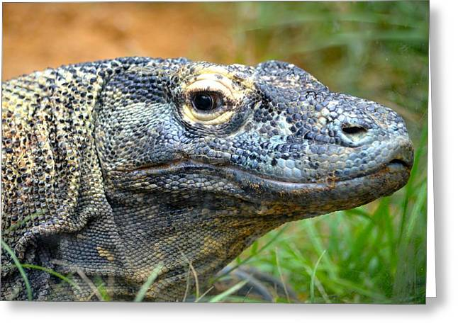 Large Scale Greeting Cards - Komodo Dragon Greeting Card by Richard Bryce and Family
