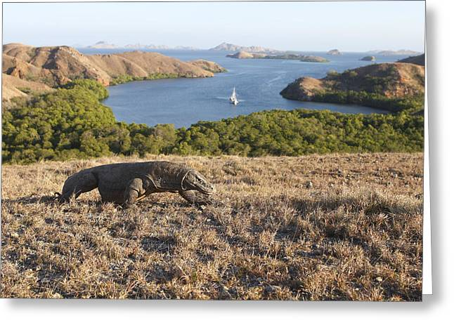 Komodo National Park Greeting Card by M. Watson