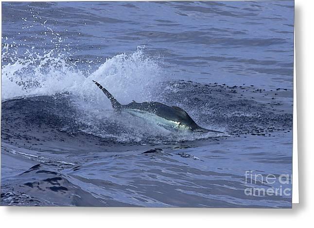 Marlin Azul Greeting Cards - Kona Missle Greeting Card by Bryan Toney
