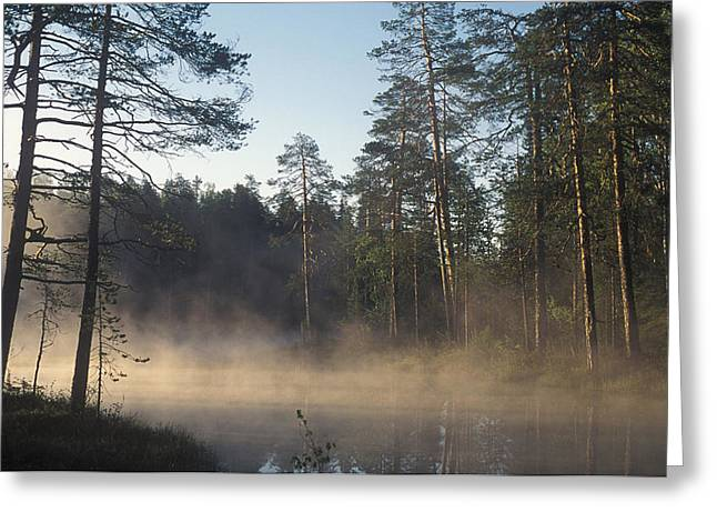 Misty Pine Photography Greeting Cards - Kostamukshi Greeting Card by Anonymous