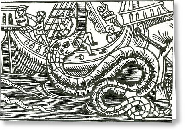 Marine Creatures Greeting Cards - Kraken Attacking Ship, 16th Century Greeting Card by Photo Researchers