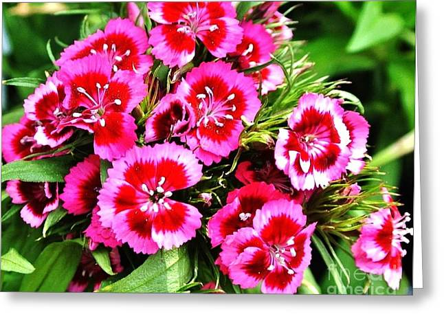 Kriss Kut Magenta Flowers Greeting Card by Marsha Heiken