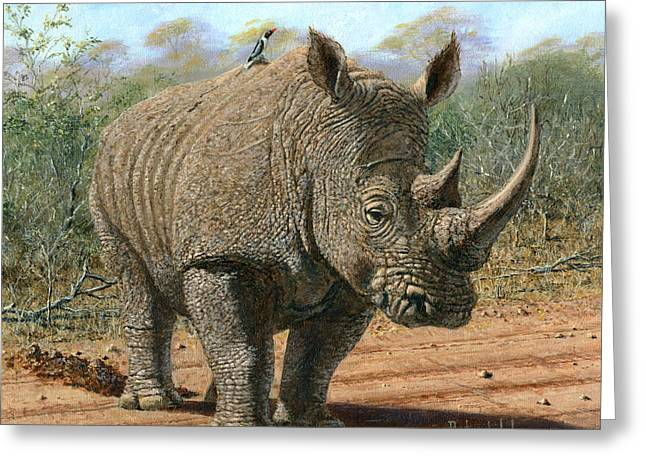 Wildlife Art Acrylic Prints Greeting Cards - Kruger White Rhino Greeting Card by Richard Harpum