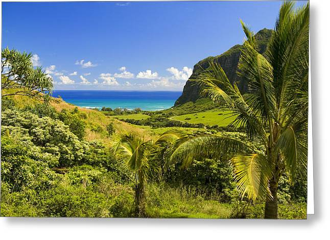 Best Sellers -  - Pastureland Greeting Cards - Kualoa Ranch Mountains Greeting Card by Dana Edmunds - Printscapes