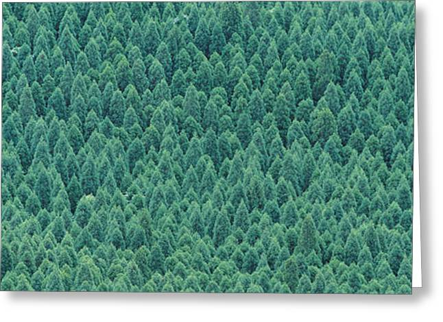 Multitude Greeting Cards - Kujyu Cho Ooita Japan Greeting Card by Panoramic Images