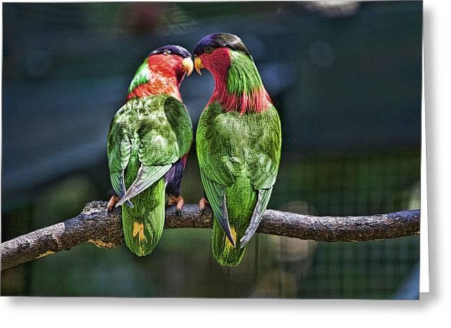Collar Greeting Cards - Kula Bird Greeting Card by Douglas Peebles