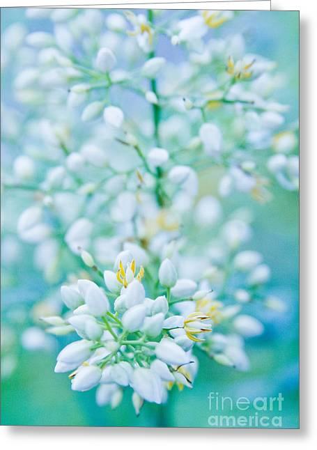 Kula Greeting Cards - Kula Enchanting Florals Greeting Card by Sharon Mau