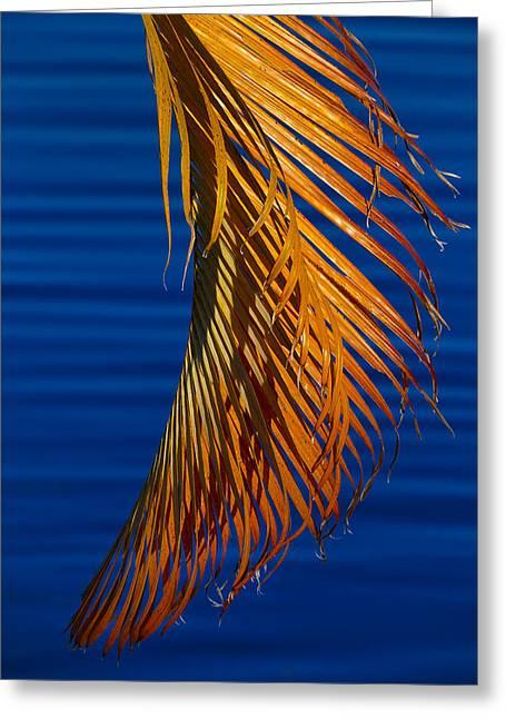 Cenote Greeting Cards - Kundalini Greeting Card by Skip Hunt