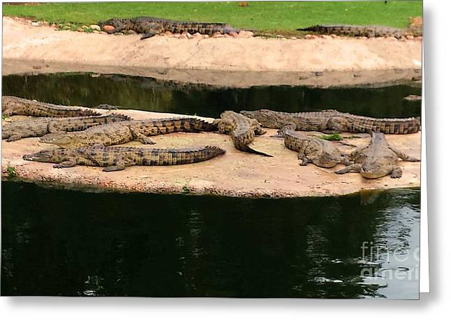 Stellenbosch Photographs Greeting Cards - La Bonheur Crocodiles Greeting Card by Lisa Byrne
