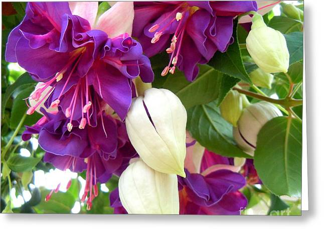 Pinks And Purple Petals Greeting Cards - La Campanella Fuchsia Greeting Card by Anne Gordon