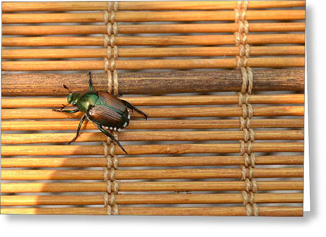 La Cucaracha The Bug Greeting Card by Ion vincent DAnu
