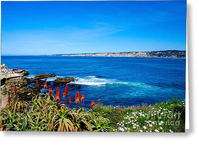 Diving In California Greeting Cards - La Jolla Cove Greeting Card by Baywest Imaging
