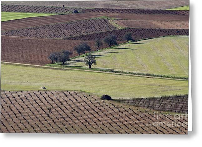 La Mancha Greeting Cards - La Mancha Landscape - Spain Series-cinco Greeting Card by Heiko Koehrer-Wagner