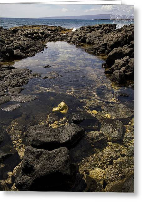 La Perouse Bay Greeting Cards - La Perouse Tidepool Greeting Card by Jessica Velasco