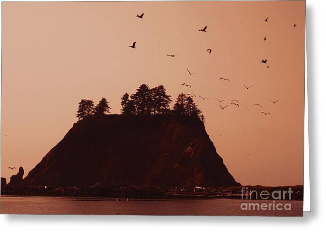 Cape Flattery Greeting Cards - La Push Silhouette With Birds Greeting Card by Kym Backland