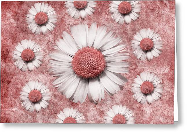Aimelle Prints Greeting Cards - La Ronde Des Marguerites - Pink 02 Greeting Card by Variance Collections