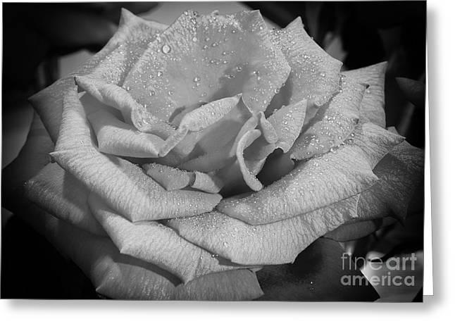 Eyzen Medina Greeting Cards - La Rosa Greeting Card by Eyzen M Kim