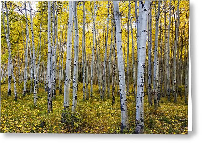 Wood Castle Greeting Cards - La Sal Aspen Greeting Card by Mark Kiver
