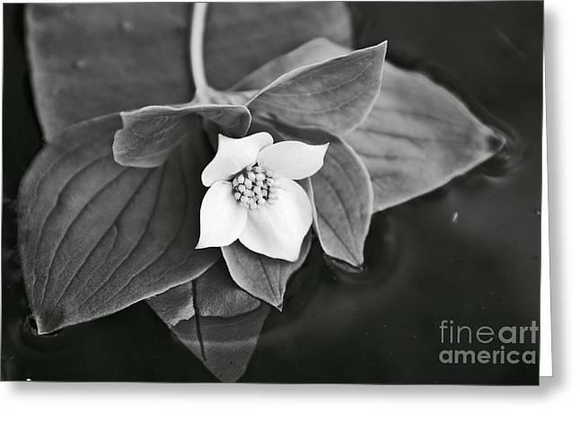 Aimelle Photography Greeting Cards - La Vie en Noir et Blanc Greeting Card by Aimelle
