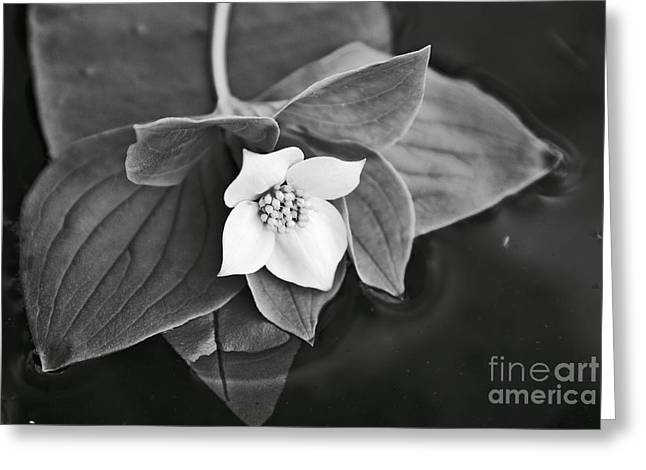 Aimelle Photography Greeting Cards - La Vie en Noir et Blanc Greeting Card by Aimelle