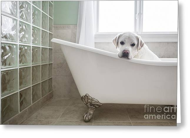 White Lab Greeting Cards - Lab in a Bathtub Greeting Card by Diane Diederich