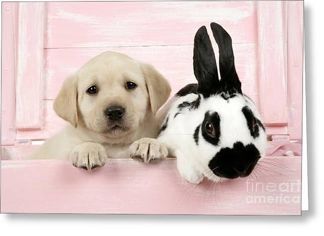 Best Friend Greeting Cards - Lab Puppy And Bunny Greeting Card by John Daniels