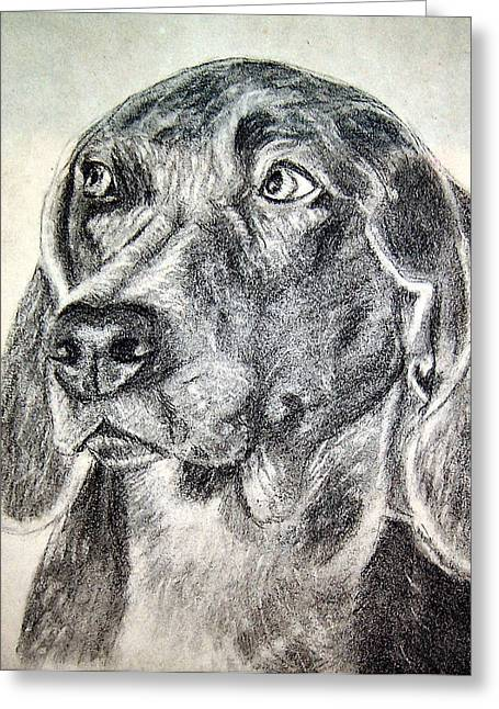 Working Dog Greeting Cards - Lab Sketch  Greeting Card by Joy Reese