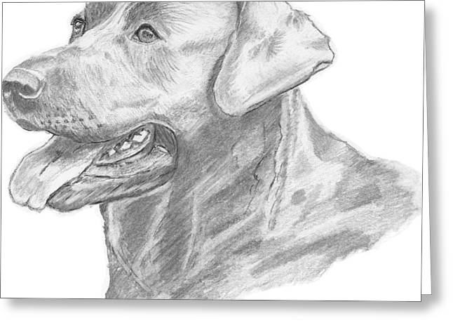 Dog Owner Drawings Greeting Cards - Labrador Dog Drawing Greeting Card by Catherine Roberts