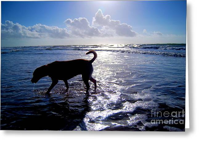 Love The Animal Greeting Cards - Labrador Loves the Beach Greeting Card by Brigitte Cadena