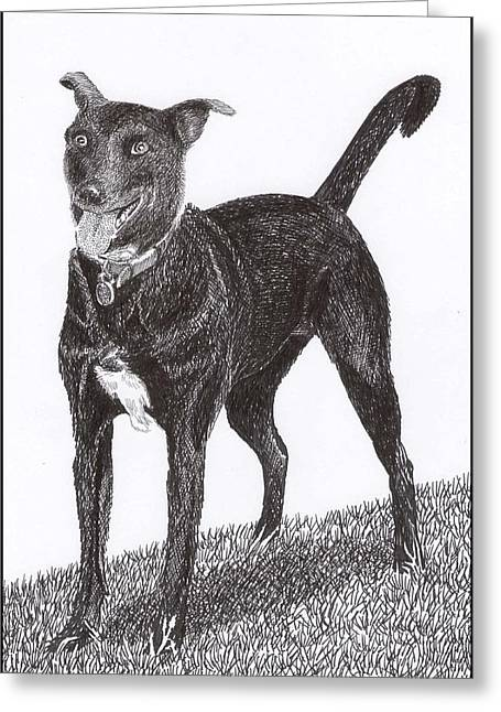Best Friend Drawings Greeting Cards - Labrador  Mix Own Cee Greeting Card by Jack Pumphrey