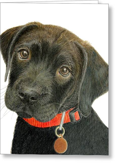 Chocolate Lab Greeting Cards - Labrador Retriever Puppy Greeting Card by Jacqueline Barden