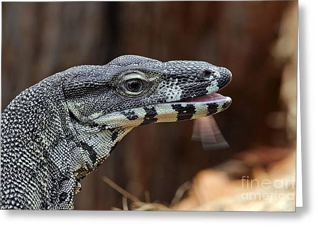 Goanna Greeting Cards - Lace Monitor Lizard Flicking Its Tongue Greeting Card by Gerry Pearce