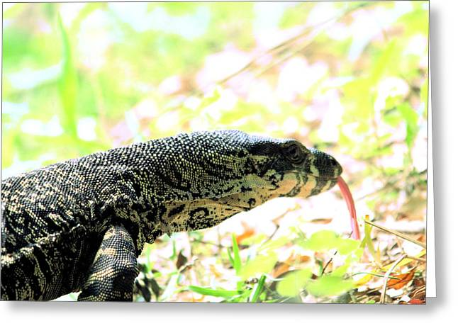 Goanna Greeting Cards - Lace Monitor Profile Greeting Card by David Rich
