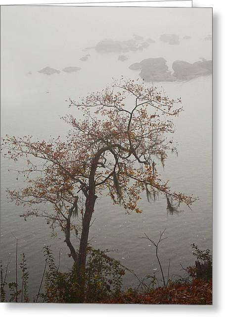 Nature Picture Greeting Cards - Lace Greeting Card by Skip Willits