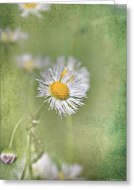 Green Blade Of Grass Greeting Cards - Laced in Thought Greeting Card by Lyndsey Warren