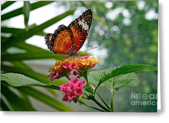 Invertebrates Greeting Cards - Lacewing Butterfly Greeting Card by Karen Adams