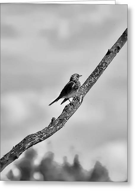 Sit-ins Greeting Cards - Lack And White Monochrome Walking To Haeven Wildfowl Resting On A Tree Which Seems To End In Heaven. Greeting Card by Leif Sohlman
